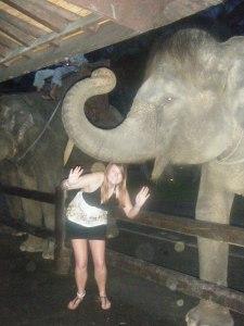 KO elephant